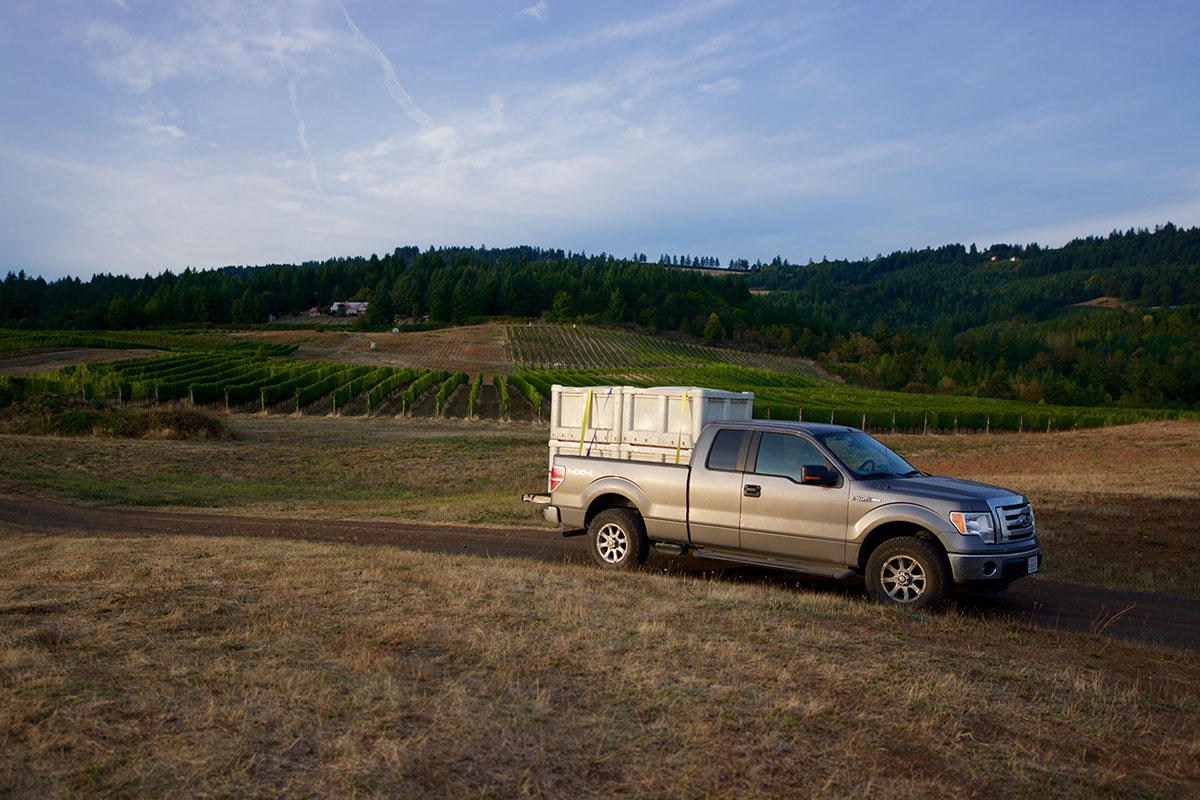 1.5 tons of our Pinot